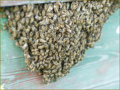 Safe Beehive removal